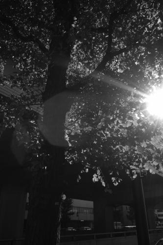 透き通る光(モノクロ)